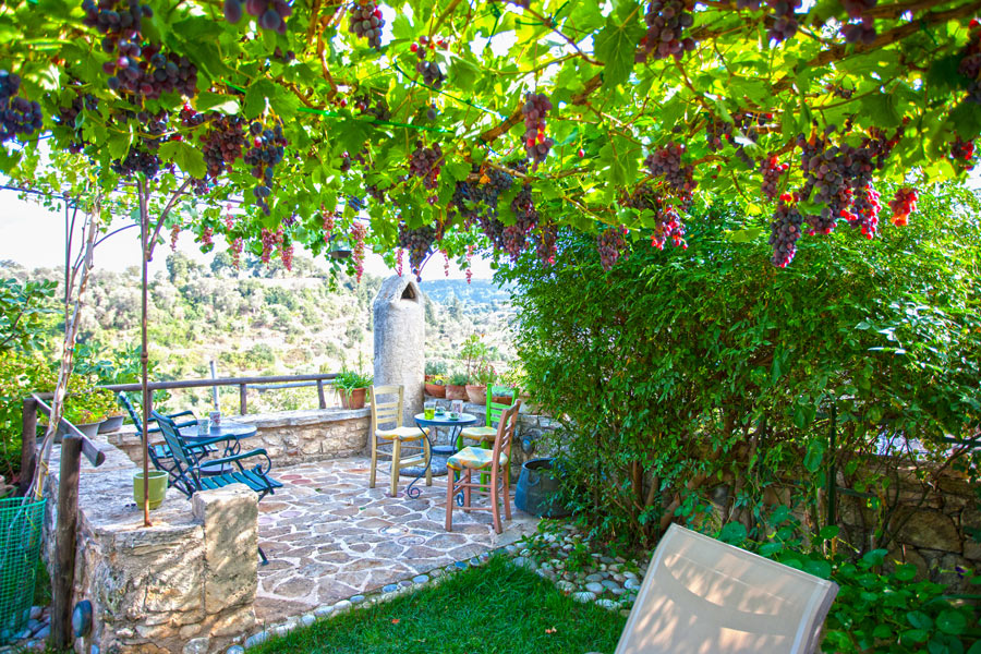 Enjoy relaxing in our garden under the grapevines!