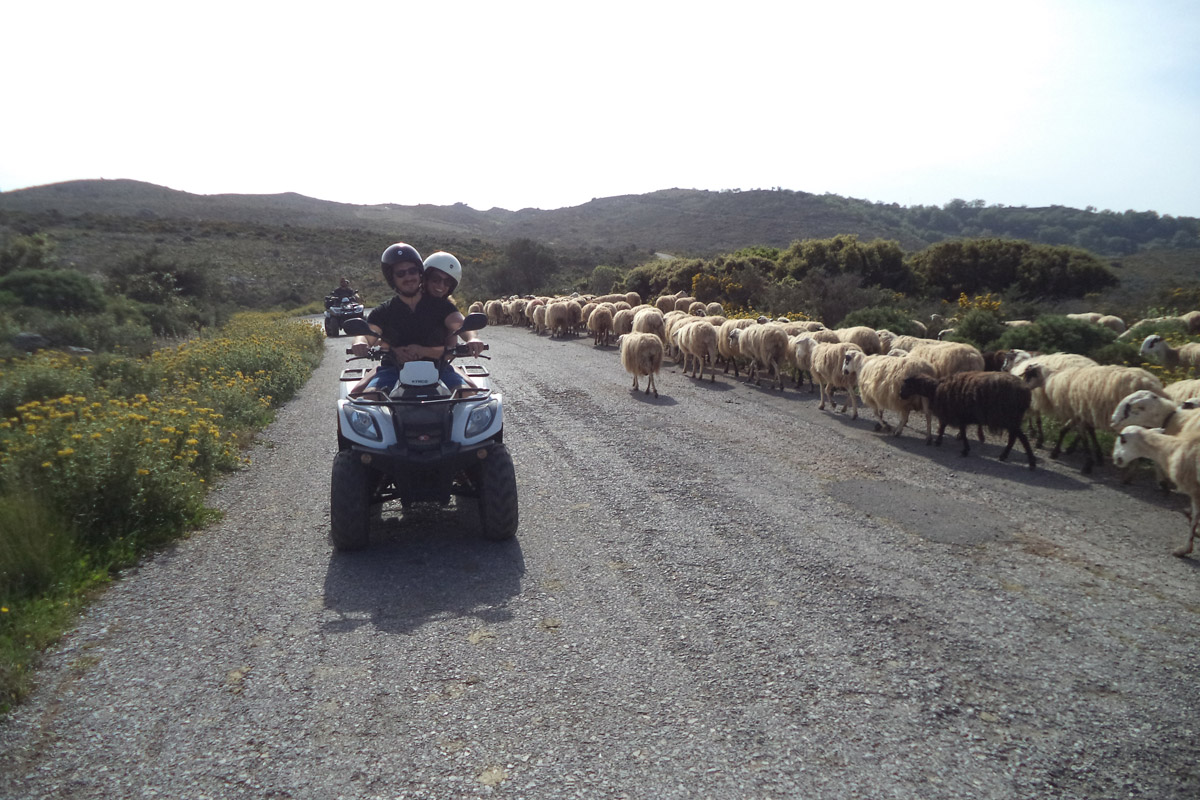 WILDLIFE IN CRETE QUAD SAFARI RETHYMNO CRETE