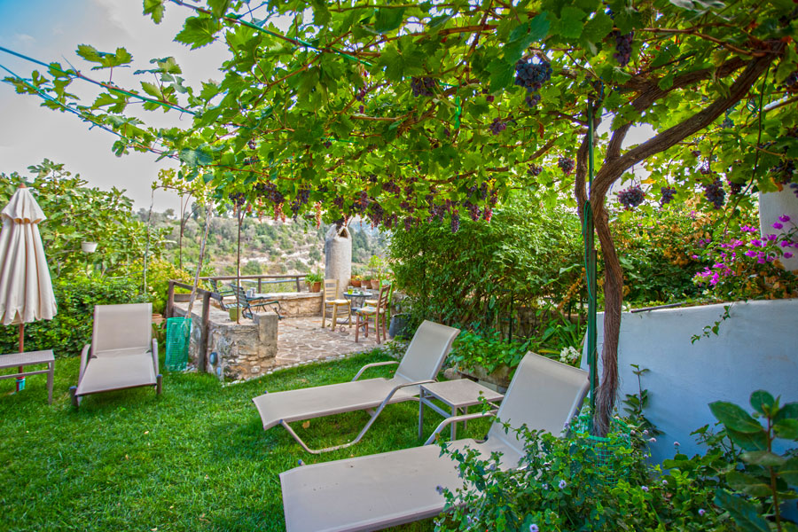 Outdoors - Relax under our grape trees
