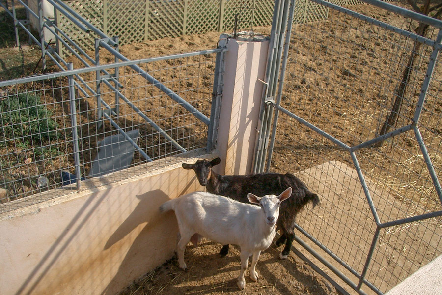 Outdoor - Welcome to our farm - goats
