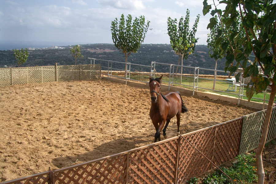 Outdoor - Welcome to our farm - horse