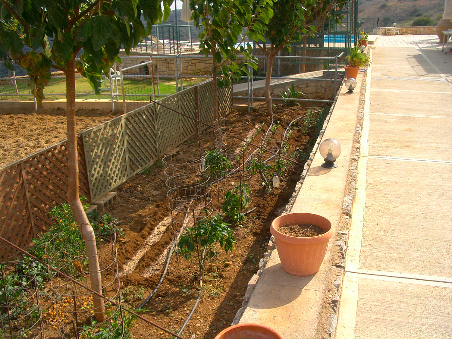 Outdoor - Our vegetable garden with many varieties!