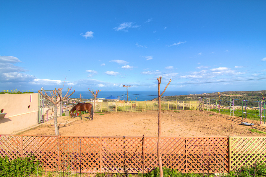 Outdoor - Our farm and horse